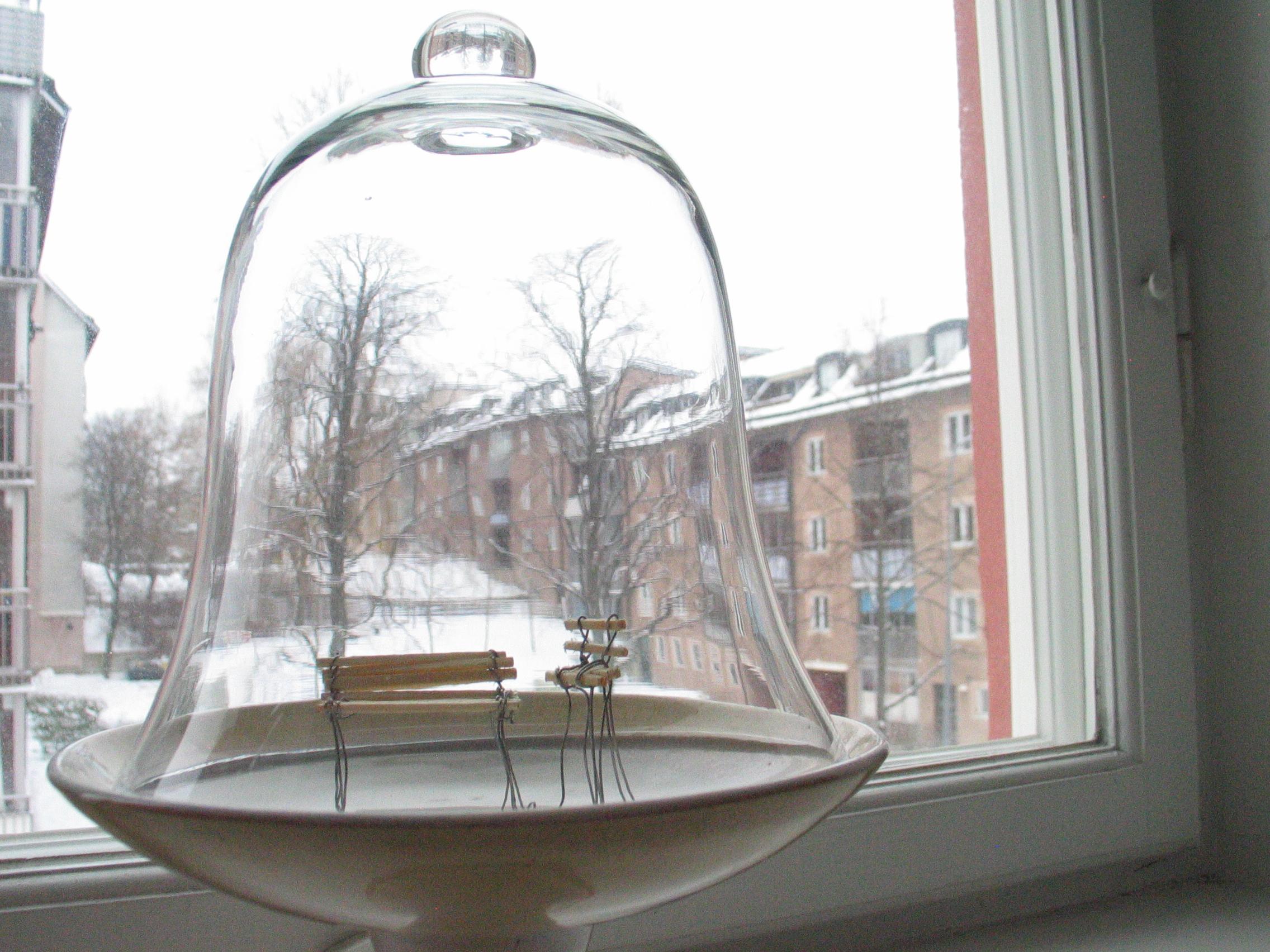 Sparar våren i en liten glaskupa.